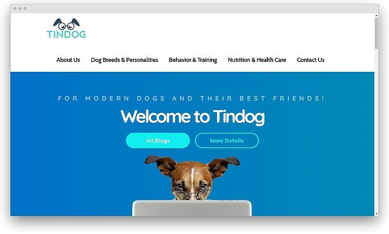 screenshot tindog co 1574254492031 - Most popular like Tinder dating apps in 2020